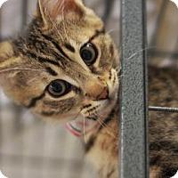 Adopt A Pet :: TALLULAH - Kyle, TX