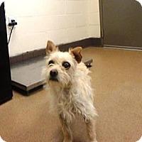 Adopt A Pet :: Chewie - Las Vegas, NV
