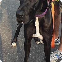 Adopt A Pet :: Opie - Huntersville, NC