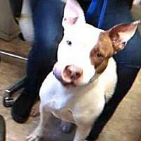 Adopt A Pet :: MISSY - Paradise, CA