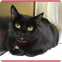 Adopt A Pet :: BOBBI - Marietta, GA