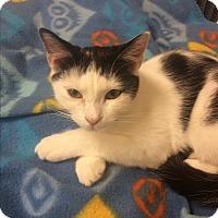 Adopt A Pet :: Theo - Hallandale, FL