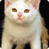 Adopt A Pet :: Cannoli - Newland, NC