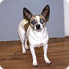 Adopt A Pet :: 17-d01-005 Frenchie