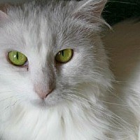 Adopt A Pet :: Este - Jenkintown, PA