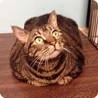 Adopt A Pet :: Rita - Orange, CA