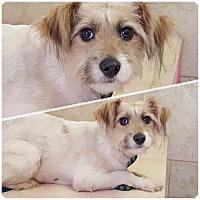 Adopt A Pet :: Lovely Libby - Naples, FL