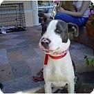 Adopt A Pet :: MALIBU