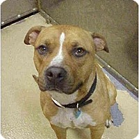 Adopt A Pet :: Prince - Emory, TX