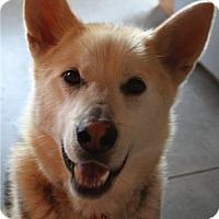 Adopt A Pet :: Max - Kettle Falls, WA