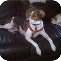 Adopt A Pet :: Cooper Sterling - Phoenix, AZ