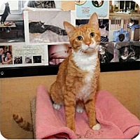 Adopt A Pet :: Leo - Farmingdale, NY