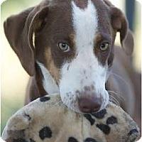 Adopt A Pet :: Bella - Providence, RI
