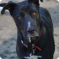 Adopt A Pet :: Duke - Simi Valley, CA