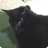 Adopt A Pet :: Donner - Colmar, PA