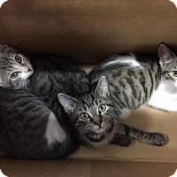 Adopt A Pet :: Spice Girls - East Hanover, NJ