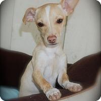 Adopt A Pet :: Elsa - La Habra Heights, CA
