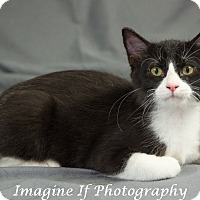 Adopt A Pet :: Toulouse - Edmond, OK