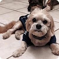 Adopt A Pet :: Spencer - Dallas, TX