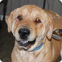 Adopt A Pet :: Calzone - Harmony, Glocester, RI