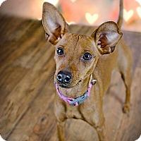 Adopt A Pet :: Bambi - New Oxford, PA