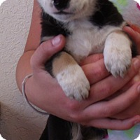 Adopt A Pet :: SAMMIE - Corona, CA