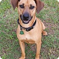 Adopt A Pet :: Kasey - Bryan, TX