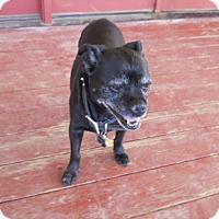 Adopt A Pet :: Ziggy - dewey, AZ