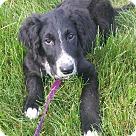 Adopt A Pet :: Henley
