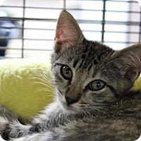 Adopt A Pet :: Mary - Sarasota, FL