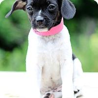 Adopt A Pet :: Baja - Waldorf, MD