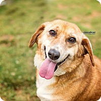 Adopt A Pet :: Chloe - Lawrenceville, GA