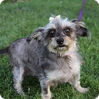 Adopt A Pet :: BETSY - Newport Beach, CA