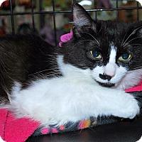 Adopt A Pet :: Miri - Madison, AL