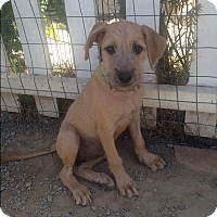 Adopt A Pet :: Lilly - BONITA, CA