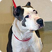 Adopt A Pet :: Bonita - Wildomar, CA