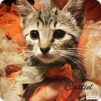 Adopt A Pet :: Castle - Zanesville, OH