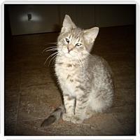 Adopt A Pet :: LYBERT - Medford, WI