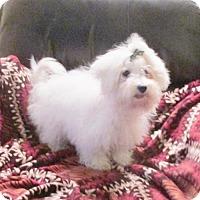 Adopt A Pet :: Montie aka (Yeva) - WOODSFIELD, OH