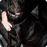 Adopt A Pet :: Moka - Williston, VT