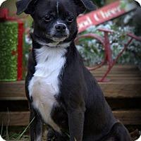 Adopt A Pet :: Thelma - Dixon, KY