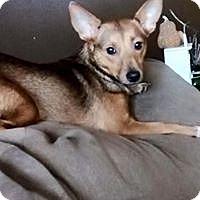 Adopt A Pet :: Foxy - Crestview, FL