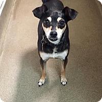 Adopt A Pet :: Angie - Boca Raton, FL