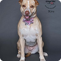 Adopt A Pet :: Kira - Houston, TX