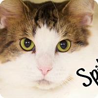 Adopt A Pet :: Spike - Livonia, MI