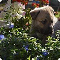 Adopt A Pet :: Bennie - Deltona, FL