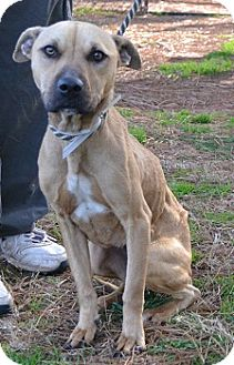 Terrier (Unknown Type, Medium)/Hound (Unknown Type) Mix Dog for adoption in Athens, Georgia - Ria