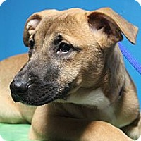 Adopt A Pet :: Nala - Wytheville, VA