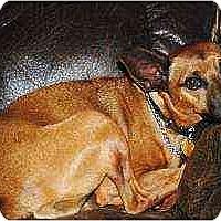 Adopt A Pet :: Ruby - Florissant, MO