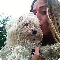 Adopt A Pet :: Libby - Milan, NY